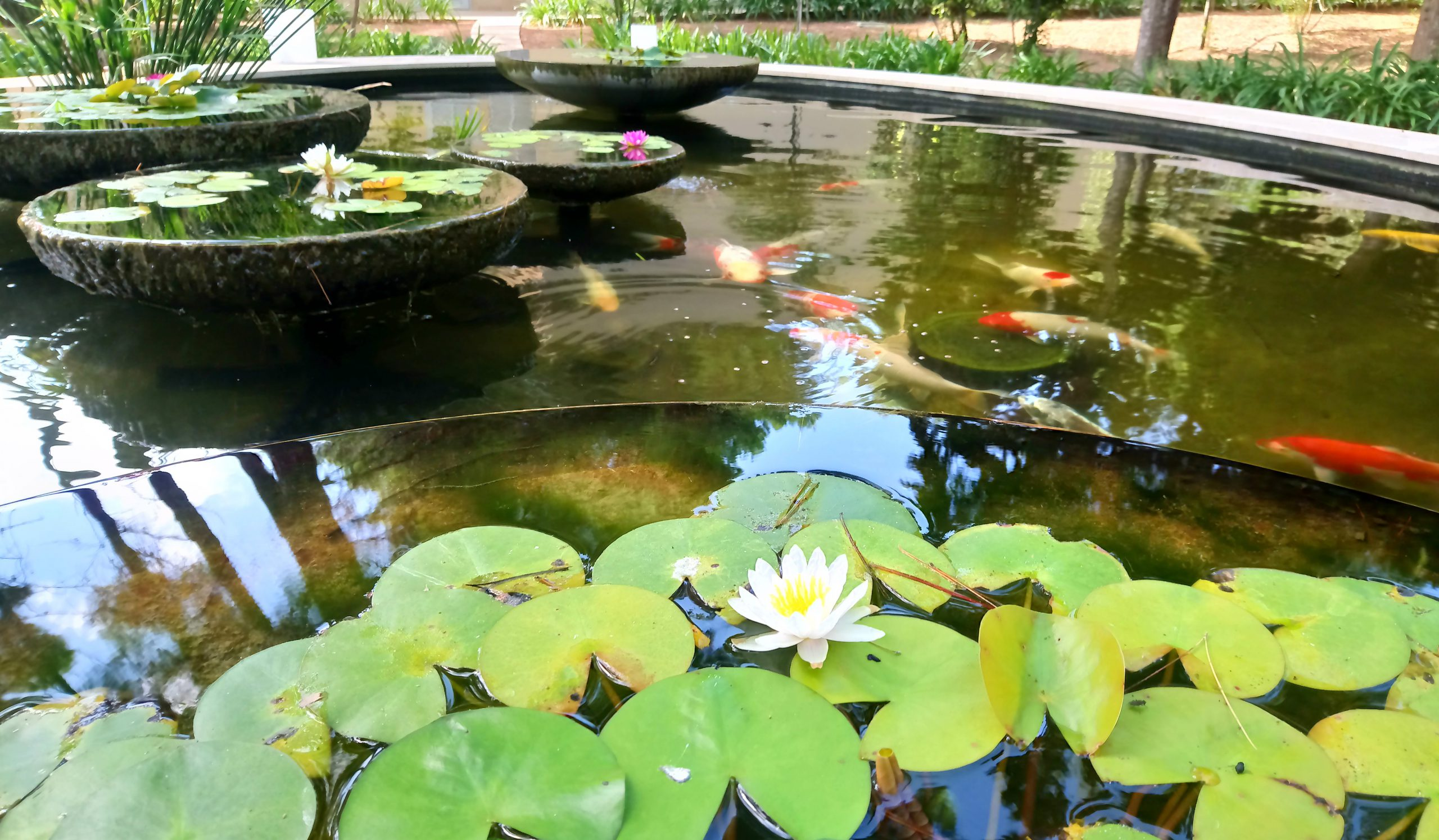 Ornamental Ponds Aquaforte Reliable And Innovative Swimming Pond Products